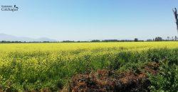 Parcela de 8,9 hectáreas en Santa Cruz.