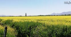 Parcela de 4,4 hectáreas en Santa Cruz.